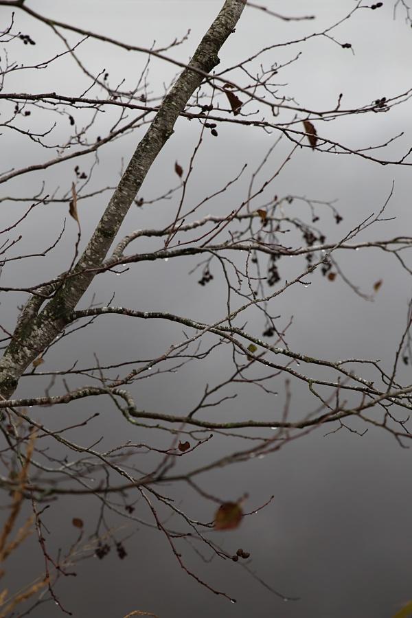 lokakuu puu KAISLIKOSSA SUHISEE KIITOLLISUUS